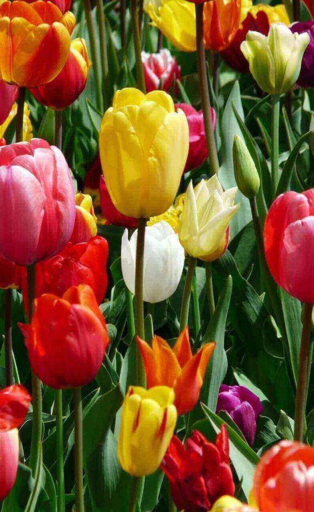 duferflower_fronde_fiorite